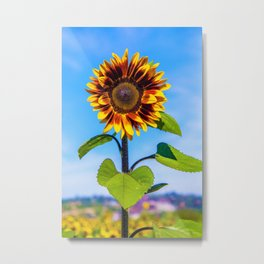 Sunflower Standing Tall by Reay of Light Metal Print