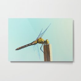 Beautiful colorful dragonfly insect close-up resting on dried bamboo stick in summer Metal Print