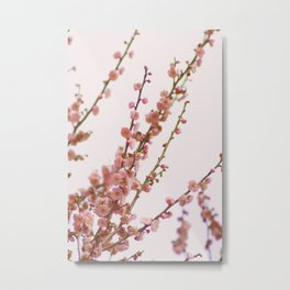 pink skies and apricots Metal Print