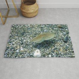 Cuttlefish Camouflage. Cuttlefish Swimming Underwater. Rug