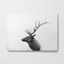 Bull Elk  Black and White Wildlife Photography Metal Print
