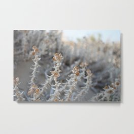 summer plant close up Metal Print