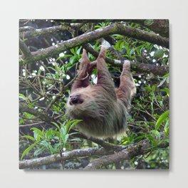 Sloth_006_by_JAMFoto Metal Print