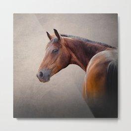 Drawing portrait  horse 10 Metal Print
