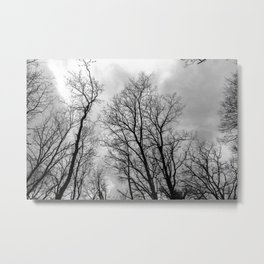 Creepy black and white trees Metal Print