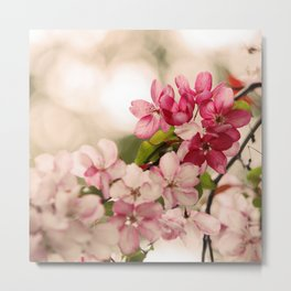 Cherry Pink Blossoms bursting with Spring Metal Print