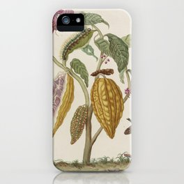 Maria Sibylla Merian Fruits Cocoa iPhone Case