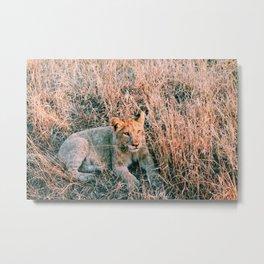 cub Metal Print