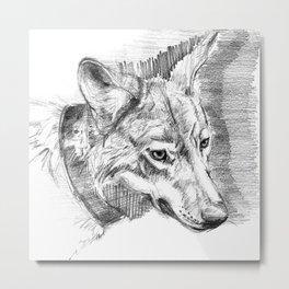 Eastern timber wolf Metal Print