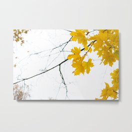Yellow autumn / black and white abstract Metal Print