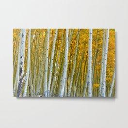 Aspen Trees in Colorado  Metal Print
