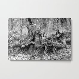 Creeping Sweetgum Tree Metal Print