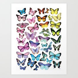Butterfly Rainbow Art Print