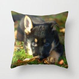 Cute 8 weeks old shepherd puppy Throw Pillow