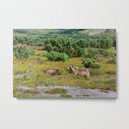 Kamchatka brown bears (mother and cub) Metal Print