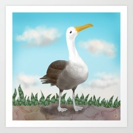 The Pretty Waved Albatross from Galapagos Art Print