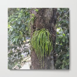 Epiphyte growth on tree in rainforest Metal Print