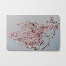 Pastel Pink Magnolias Metal Print
