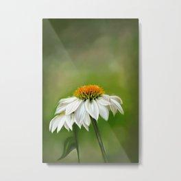 Little White Cone Flower Metal Print