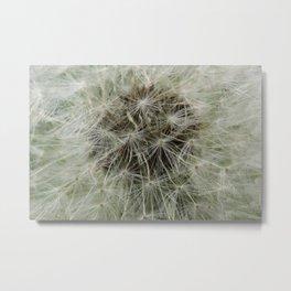 Dandelion 6 Metal Print