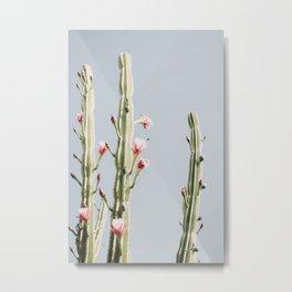 Cereus Cactus Blush Metal Print