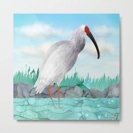Crested Ibis - Splendid Japanese Tall Bird  Metal Print