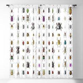 Beetlemania / Get your entomology on! Blackout Curtain