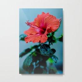 Pink Hibiscus Flower in a Green Wood Metal Print
