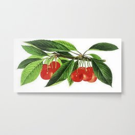 Red Cherries Vector on White Background Metal Print