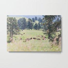 Where the Buffalo Roam - Nature Photography Metal Print