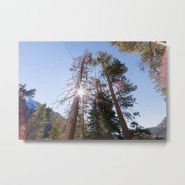 Mountainside Jeffrey Pine Trees (Lower Echo Lake, California) Metal Print