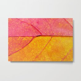 Nature Abstract: Cells and Veins of a Colorful Close up Autumn Leaf Metal Print