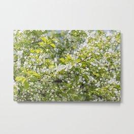 Crabapple Blossoms 12 Metal Print
