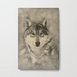 Timber Wolf Pencil Illustration Metal Print