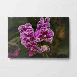Purple Orchid Metal Print