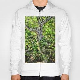 Craggy Pinnacle Trail Tree Hoody