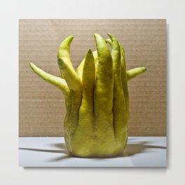 Buddha's Hand: Citrus Fruit Metal Print