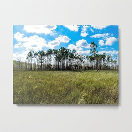 Cypress Trees and Blue Skies Metal Print