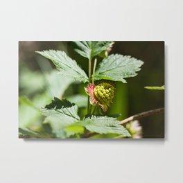 Young Salmonberry Photography Print Metal Print