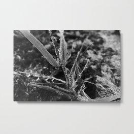 Exmoor X Metal Print