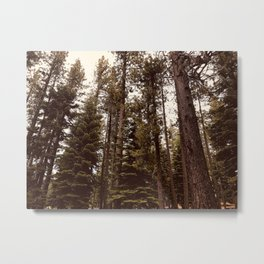 Lake Tahoe Trees Metal Print
