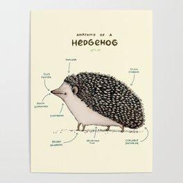 Anatomy of a Hedgehog Poster
