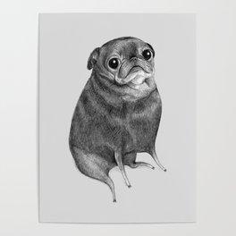 Sweet Black Pug Poster