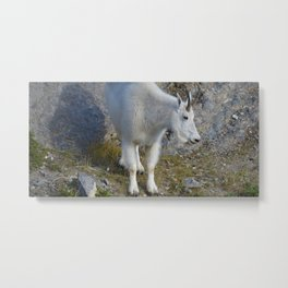 Mountain goat in the Canadian Rocky Mountains Metal Print