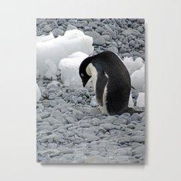 Adelie Penguin Metal Print