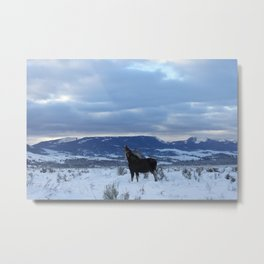 Moose at Antelope Flats Metal Print