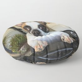 French Bull  Dog  Puppies Floor Pillow