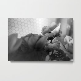 black+white anemones #2 Metal Print