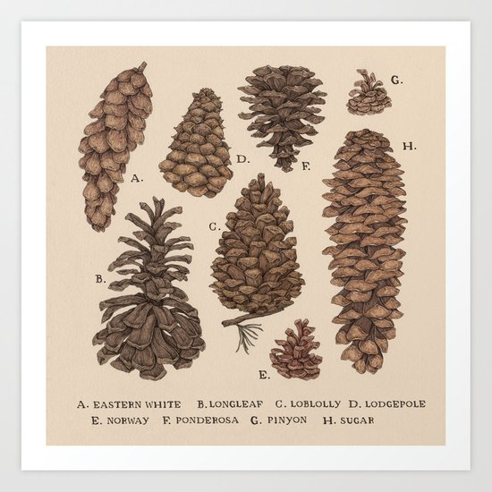 Pinecones by jessicaroux
