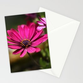 pink cape daisy Stationery Cards